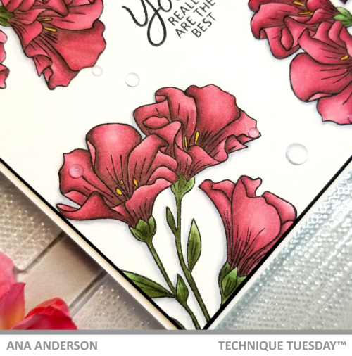 AnaA-April2019-Blog-Post-Meadow-Flowers5
