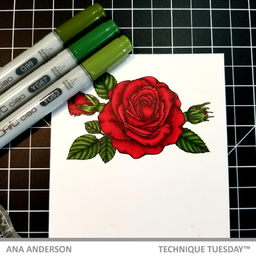 TT-AnaA-May-blog-post-Sending-Roses4