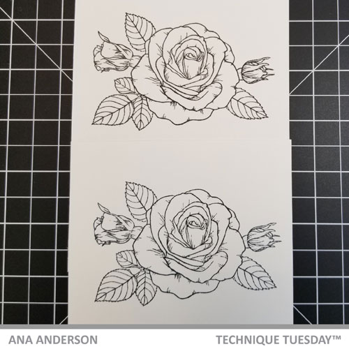 TT-AnaA-May-blog-post-Sending-Roses1