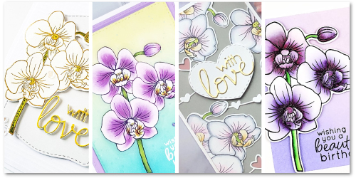 Alluring-Orchids-Banner